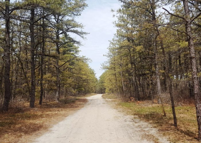 Long Island Pine Barrens Trail