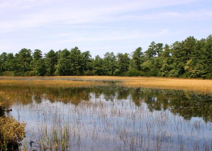 Sandy Pond in Long Island Pine Barrens