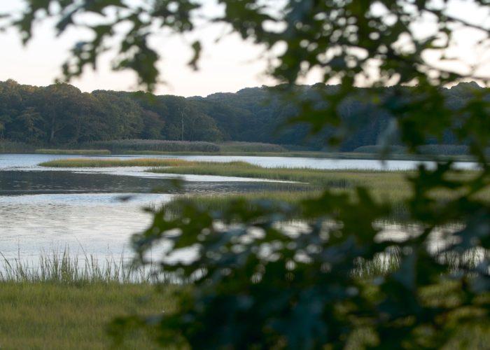 Long Island Pine Barrens Marsh