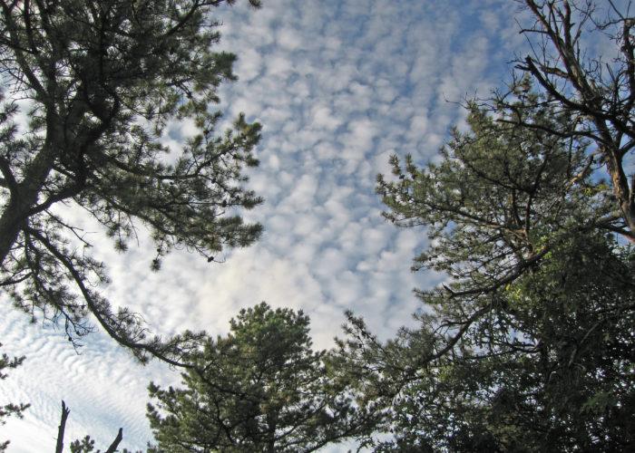 Long Island Pine Barrens Sky
